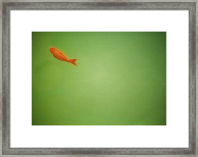 Fish In Green Framed Print