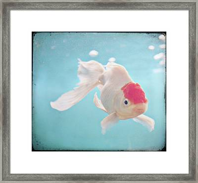 Fish In The Sea Framed Print by photo by Anna Theodora
