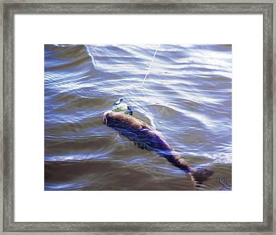 Fish In The Water Framed Print by Kelly Rader