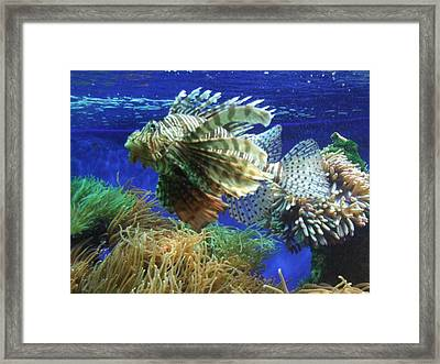 Fish Framed Print by King Ify