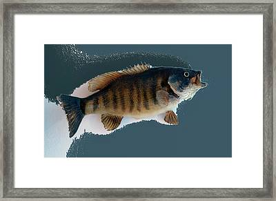 Fish Mount Set 10 B Framed Print by Thomas Woolworth