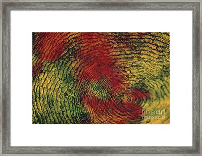 Fish Scale Framed Print by Eric V. Grave