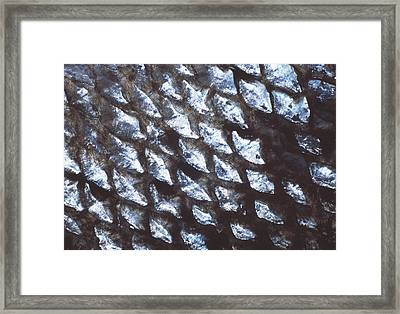 Fish Scales Framed Print by Alan Sirulnikoff
