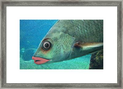 Fish Seeking Fish  Framed Print