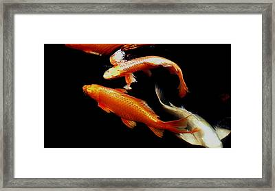 Fish Swimming Framed Print by Don Mann