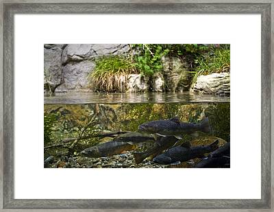 Fish Swimming In An Aquarium Framed Print