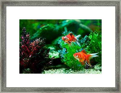 Framed Print featuring the photograph Fish Tank by Matt Malloy