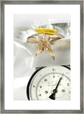 Fish With Lemon Slice On Weight Scale Framed Print