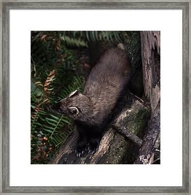 Fisher - 0005 Framed Print