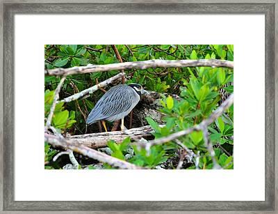 Fisherman Framed Print by Barry R Jones Jr