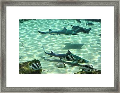 Fishes  Framed Print by Yumi Johnson