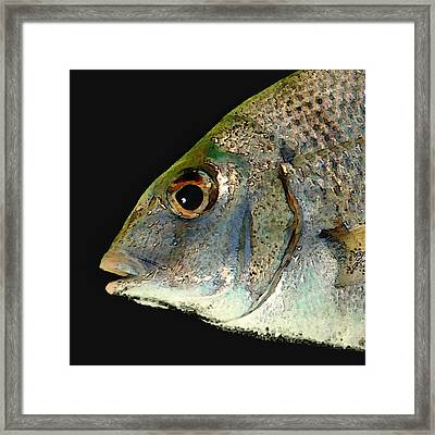 Fisheye Framed Print