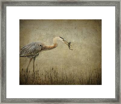 Fishin' Framed Print by Mario Celzner