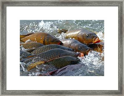 Framed Print featuring the photograph Fishing And Hunting by Elizabeth Winter