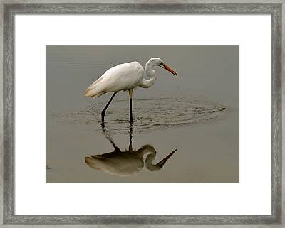 Fishing Egret With Droplets - C3282q Framed Print by Paul Lyndon Phillips