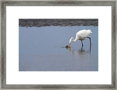 Fishing For A Meal Framed Print