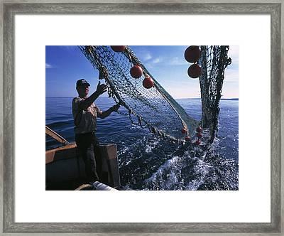 Fishing For Scientific Specimens Framed Print by Volker Steger