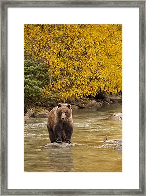 Fishing In The Fall Framed Print by Tim Grams