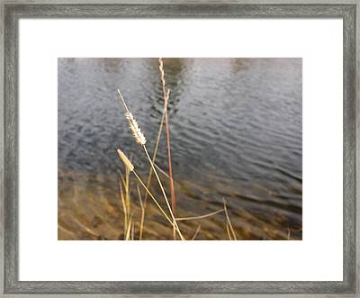 Fishing View At Grand Lake Framed Print