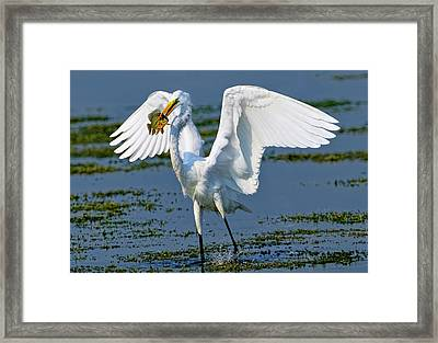 Fish'n In The Morning Framed Print