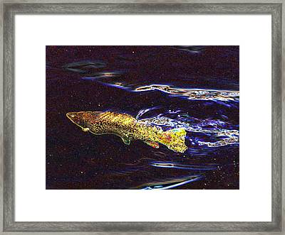Fishy Fishy In The Brook Framed Print