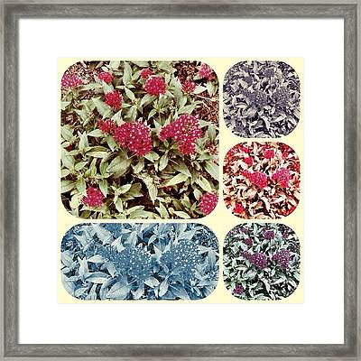Five Flower - In A Color For Any Framed Print