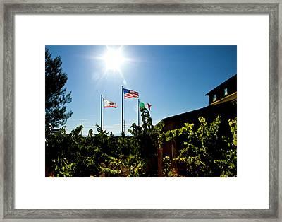Flags At A Vineyard Framed Print
