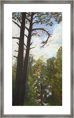 Flagstaff Pines Framed Print