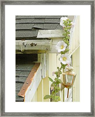 Flame And Healing  Framed Print by Pamela Patch