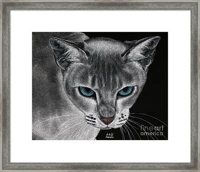 Flame Point Siemese Cat Framed Print