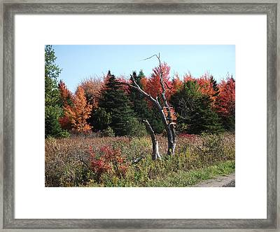 Framed Print featuring the photograph Flames Of Autumn by Christian Mattison