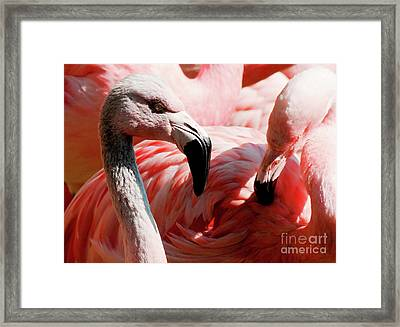 Framed Print featuring the photograph Flamigos Close Up by Charles Lupica