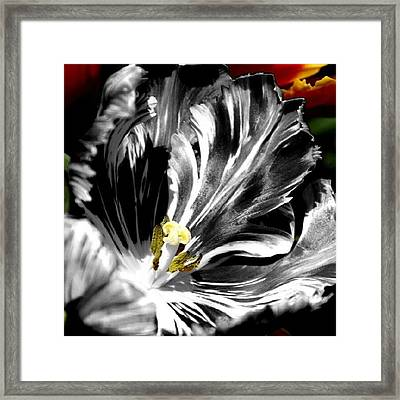 Flaming Flower 1 Framed Print