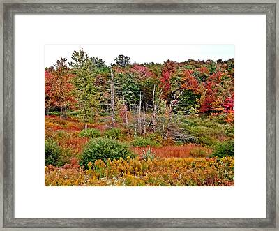 Framed Print featuring the photograph Flaming Meadow by Christian Mattison