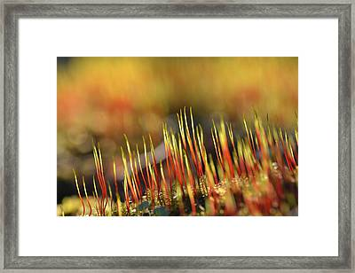 Flaming Moss Framed Print