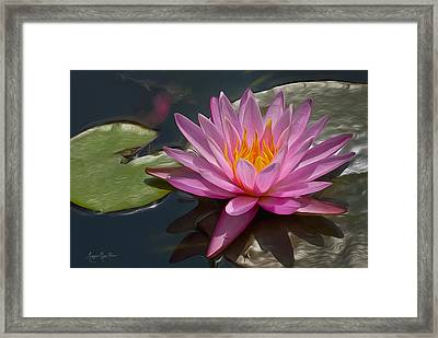 Flaming Waterlily Framed Print