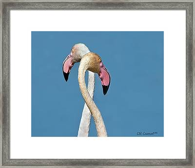 Flamingo Couple Framed Print by CR  Courson