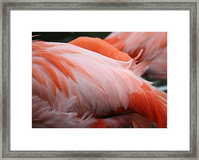 Flamingo Feathers Framed Print by Andrea  OConnell