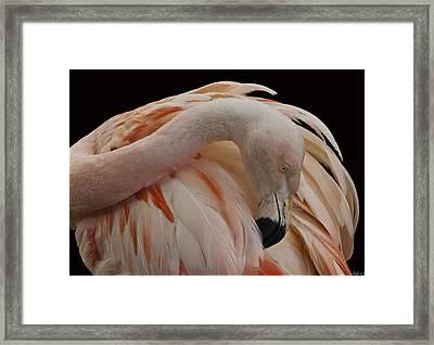 Flamingo In Inverted 4th Postion Framed Print
