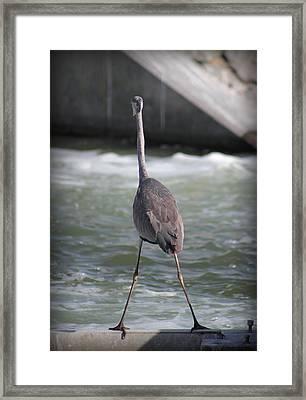 Flamingo In Strange Pose Framed Print by Radoslav Nedelchev