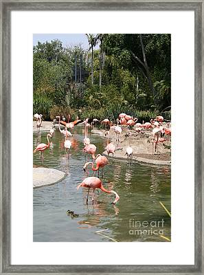 Flamingo Lagoon I Framed Print