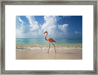 Flamingo Walking Along Beach Framed Print by Ian Cumming