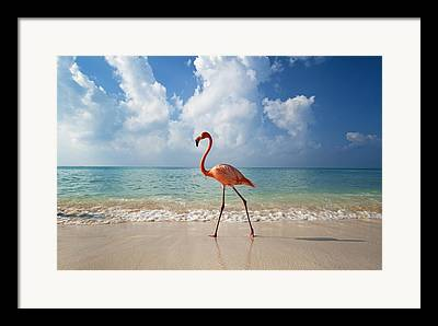 Bayahibe Framed Prints