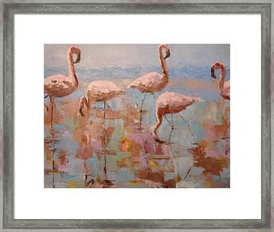 Flamingoes Framed Print
