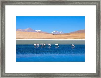 Flamingos At Lake Framed Print by Werner Büchel