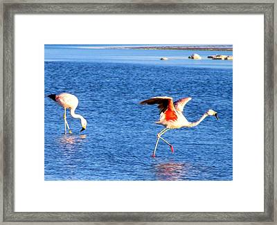 Flamingos Flamencos Framed Print