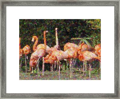 Flamingo's Framed Print by Fred Whalley
