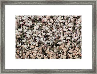 Flamingos Framed Print by Original Artworks by Grooveworks (Flickr name - jules_art)