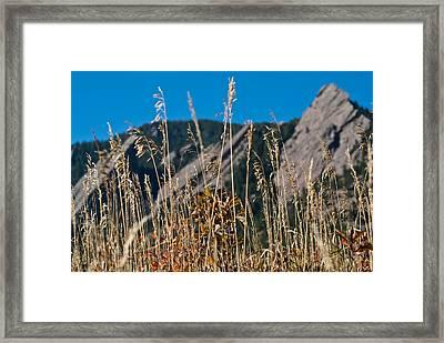 Flatiron Beauty Framed Print
