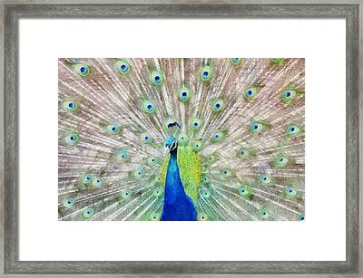 Flaunting Framed Print by Angelina Vick